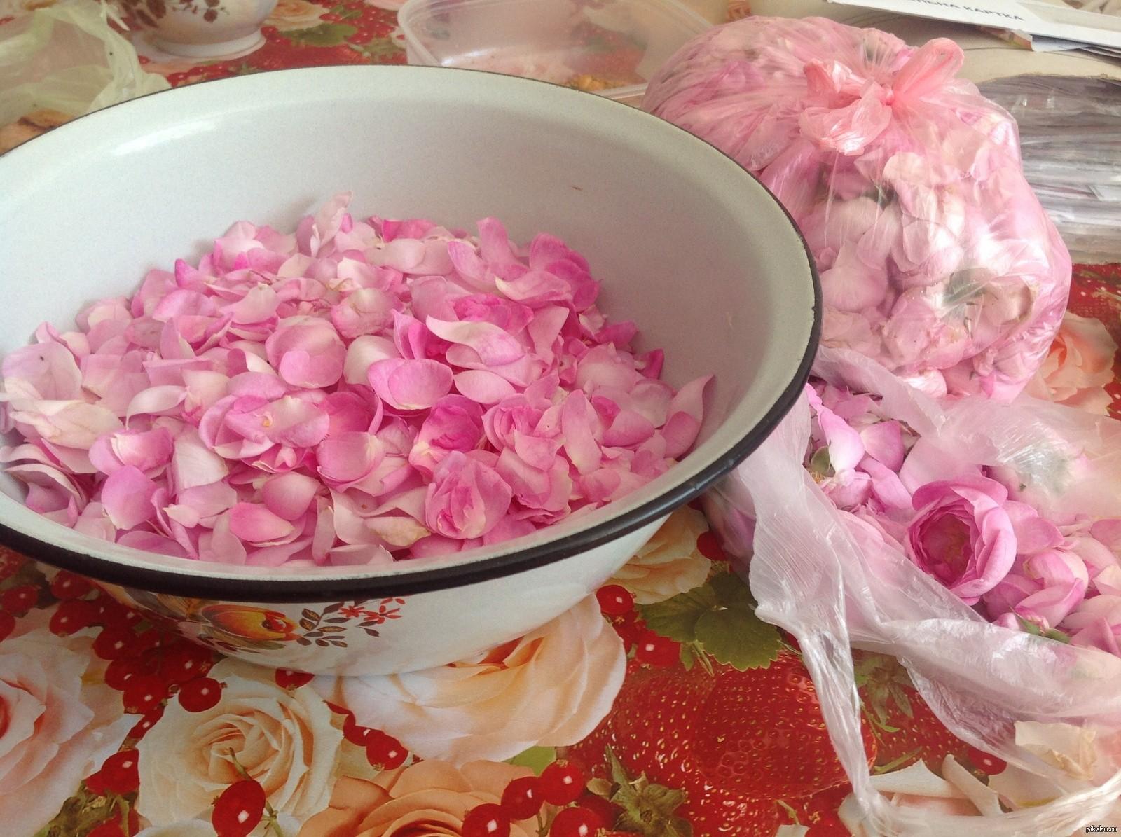 вино из чайной розы в домашних условиях