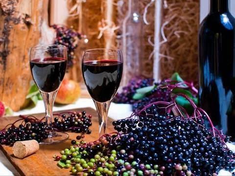Рецепт вина из ягод и цветов бузины черной