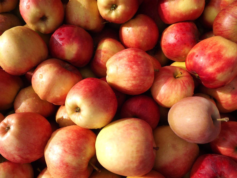 Рецепт самогона из яблок в домашних условиях