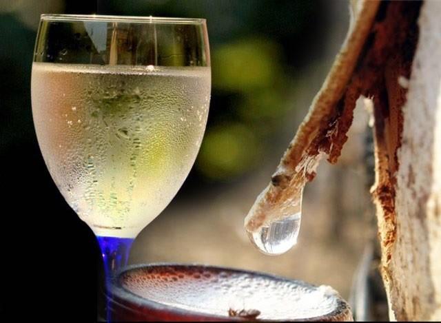 Как сделать шампанское из березового сока