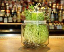 Коктейль Повелитель растений (Green Thumb)